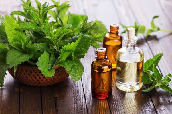 Peppermint oil for hair regrowth